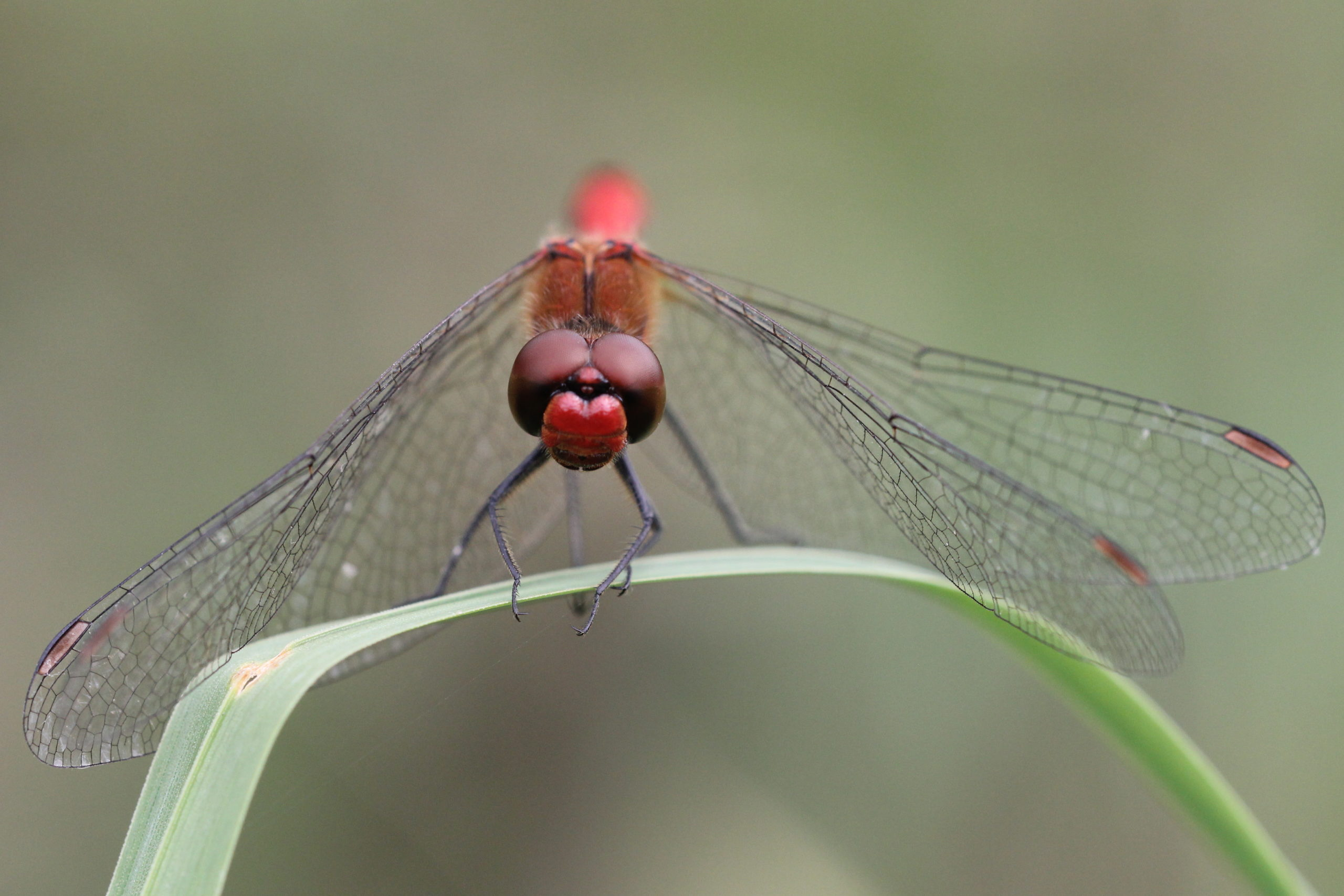 Ausstellung Fremde Nachbarn -Insektenfotografie